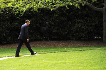 US President Barack Obama returns to the White House in Washington