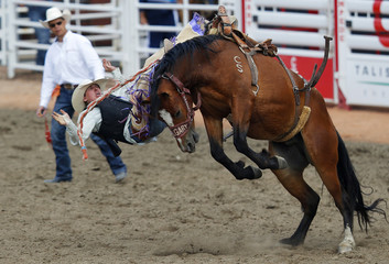 Naumczyk of Cowley, Alberta gets bucked off the horse Xile Hills in the novice saddle bronc event during day 3 of the Calgary Stampede rodeo in Calgary,.