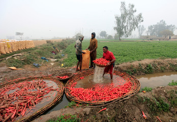Farmers wash carrots on a polluted stream during harvest season at a farm on the outskirts of Faisalabad