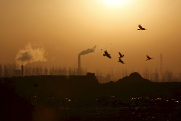 File photo shows birds flying over a closed steel factory where chimneys of another working factory are seen in background, in Tangshan