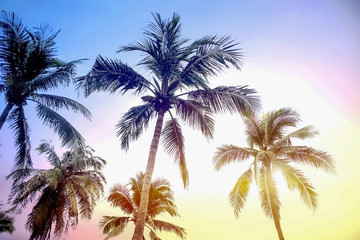 Artistic silhouette Coconut palm tree on sunset sky background.