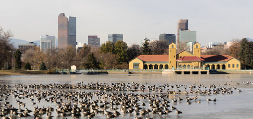 City Park Lake Ferril Frozen Water Migrating Geese