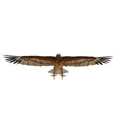 Gurney Eagle on white. Front view. 3D illustration