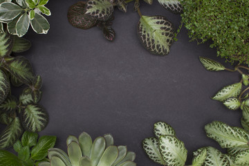 Background with variegated leaves. Episcia and succulent.
