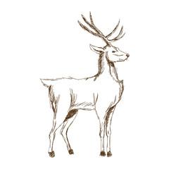 christmas deer animal antler engraving style, vintage vector illustration
