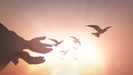 Freedom concept: Silhouette human hands open palm up with birds flying over sunset background.