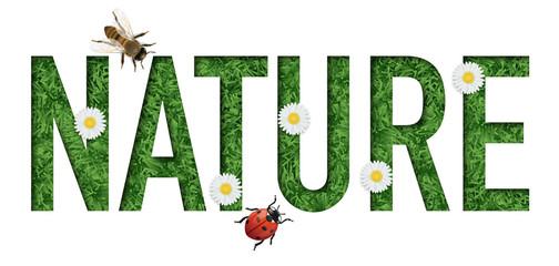 environnement - nature - mot - écologie - écosystème - protection - énergies renouvelables