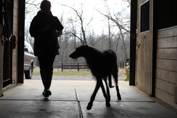 Hickory is silhouetted with her owner Cecilia Dove in the barn at Dove's 56-acre farm in Flint Hill