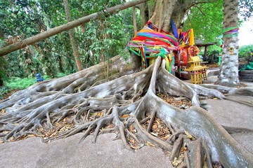 Big tree covered by powder and tied with multicolor fabrics (Faith of thai people) at Wat Pa Kham Chanod, Buddhist Temple in Udon Thani, Thailand