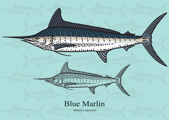 Blue Marlin, Squadron. Vector illustration for artwork in small sizes. Suitable for graphic and packaging design, educational examples, web, etc.