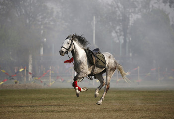 """A horse runs along the field after a solder fell from it during the """"Ghodejatra"""" Horse Race festival, which is organised by the Nepal Army, in Kathmandu"""