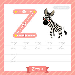 Letter Z uppercase tracing practice worksheet with zebra for kids learning to write. Vector Illustration.