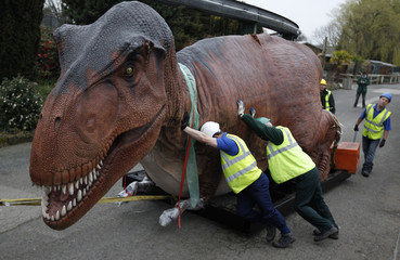 Workers move a giant Tyrannosaurus Rex model into position at Chester Zoo