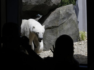 A visitor takes a picture of a polar bear in the newly opened polar bear world in the zoo of Vienna