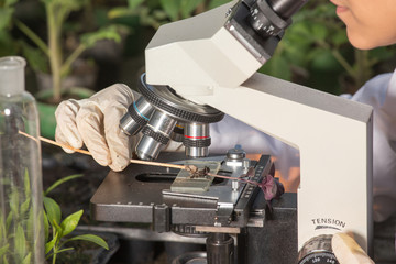 Scientist looking at microscope in greenhouse