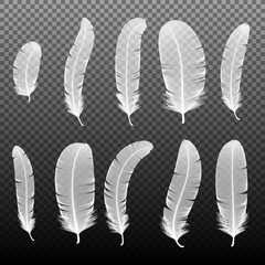 Set of various white bird feathers on a black background. Collection 3d realistic style soft fluffy macro swan vector illustration. Pen for handwriting