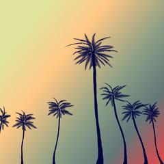 Palm_back_sunset