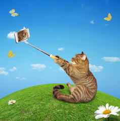 The cat takes a selfie in the meadow.