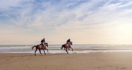 Papiers peints Equitation grand galop sur la plage à l'aube