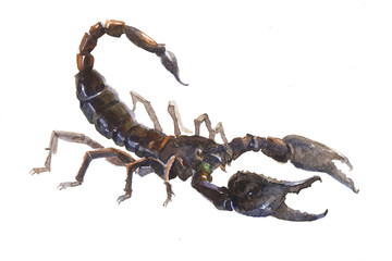 Watercolor single Scorpio animal isolated on a white background illustration.