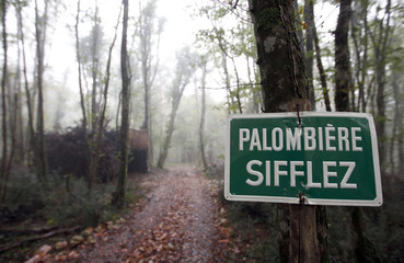 A sign signals the presence of a palombiere or cabin in the woods of Hayas in Escoussans