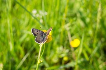 Butterfly on flower. Slovakia