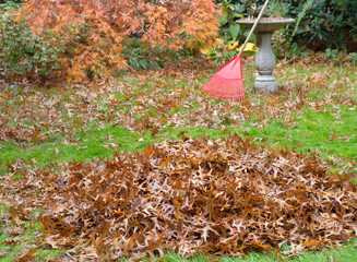 Fall leaves in backyard being raked into piles