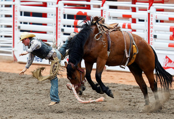 Rhett Fox of Redig, South Dakota, gets bucked off the horse C Z8 in the novice saddle bronc event during the Calgary Stampede rodeo in Calgary