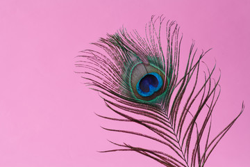 peacock feather  in vase
