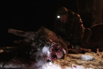 A Belarussian gamekeeper skins a wild boar killed by Russian hunters in a forest near the village of Ratsevo