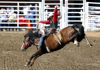 Thurston of Big Valley, Alberta rides the horse Easy To Love to win the Saddle Bronc event during Championship Sunday at the finals of the Calgary Stampede rodeo in Calgary.