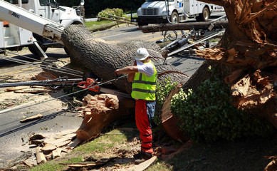 A worker wipes perspiration from his brow while cutting a huge tree which fell over power lines and across a major road in Falls Church