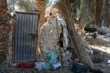 A goat pokes its head through a wall in Siwa