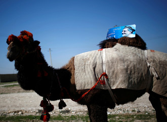 A picture of Afghan presidential candidate Abdullah is placed on a camel in Mazar-I-Shariff