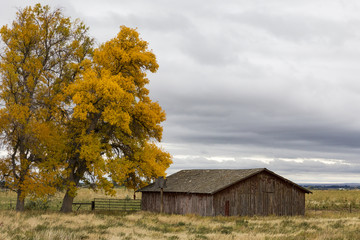 A small old barn outside Lovell Wyoming on a rainy fall day.