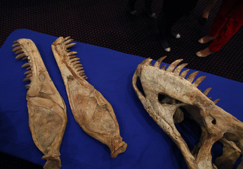 A dinosaur fossil is seen during a ceremony in New York