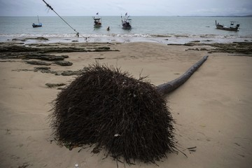 A fisherman wades through water on a small beach with fallen trees and damage still visible from 2004 tsunami in Khao Lak