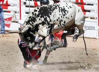 """Rodeo bullfighter Byrne gets slammed by the bull """"Teen Spirit"""" in the bull riding event during the Calgary Stampede rodeo in Calgary"""