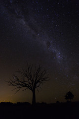 Milky Way with Tree Silhouette