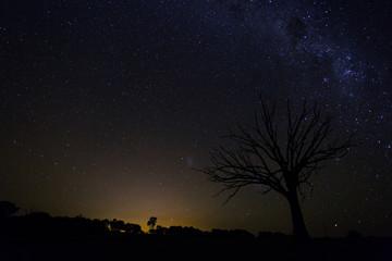 Milky Way Night Sky tree silhouette