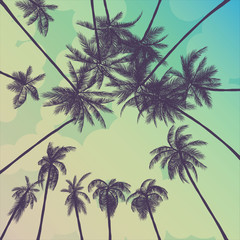 summer palm trees california