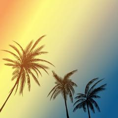 summer palm california
