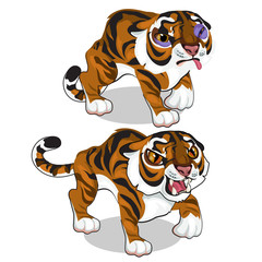 Aggressive tiger and tiger with a bruise. Vector