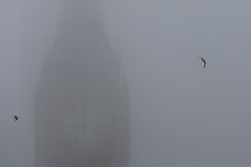Seagulls fly past the Big Ben clock during a foggy day in central London