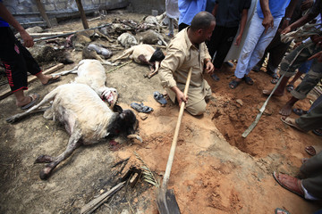 A Libyan man, standing next to dead sheep, tries to find fragments of a rocket fired from forces loyal to Muammar Gaddafi on Misrata