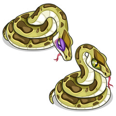 Set of two mesh pythons, one evil, another sick