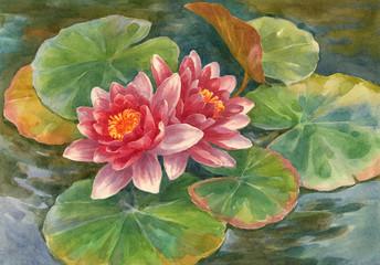 Акварельная живопись, цветущие лотосы на пруду.