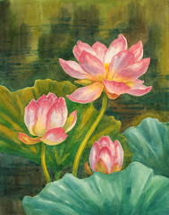 Акварель, живопись, цветущие лотосы.