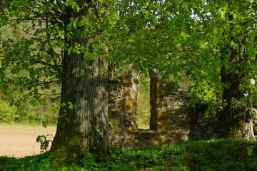Kirchenruine zum Heiligen Baum