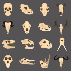 Set of mammal and reptile skulls color flat icon for web and mobile design